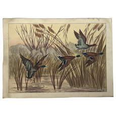 "Maurice Tawuoy (1878-1952) French well listed artist colored print of mallard ducks in flight tittle ""L'envol de canards"""