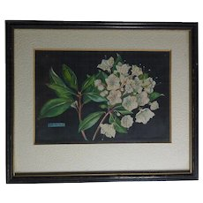 Small still life of blooming Mountain Laurel watercolor painting by artist B.K. Marshall