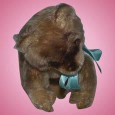 Old Mohair Raccoon Stuffed Animal Jointed Neck Sweet!