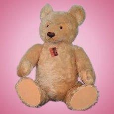 "Vintage Teddy Bear Steiff 36"" Tall Studio Bear Store Display Mohair Jointed Button Tag"