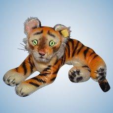 Vintage Steiff Tiger Cub W/ Button Tag 0910/17 Sweet W/ Gorgeous Eyes