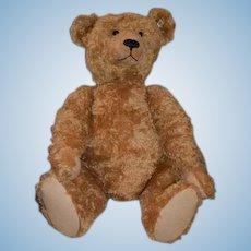 """Huge Steiff Maximilian Teddy Bear W/ Growler 32"""" Tall Limited Edition"""