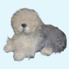 White And Gray Sheep Dog Miniature