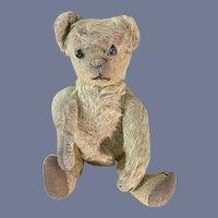 Wonderful Antique Teddy Bear Mohair Button Eyes Jointed Crier