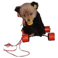 Vintage Steiff Bear on Wheels Rattler w/ Unusual Eyes Pull Toy for Doll