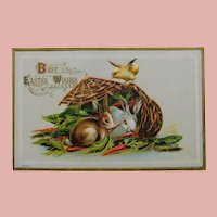 Antique Chick Gives Rabbits Carrots Easter Postcard - Circa 1913