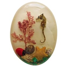 Gorgeous LUCITE Embedded Seahorse Starfish & Shells Vintage Brooch