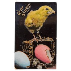 Antique Easter Chick & Eggs Postcard - Printed in Germany