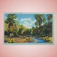 Vintage Palm Springs Linen Postcard