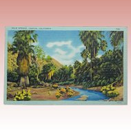Vintage Palm Springs Linen Postcard