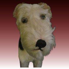 """Rare size 11"""" Foxy Steiff Mohair dog Fee P&I US Buyers"""