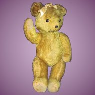 "Large 21"" Golden Mohair Teddy Bear  Free P&I US Buyers"