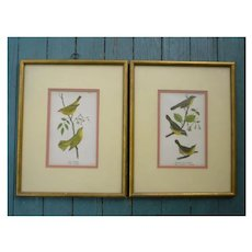 Pair Framed Yellow Warbler Birds Original Old Prints