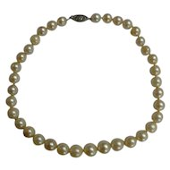 Graduated Single Strand Cultured Pearl Necklace