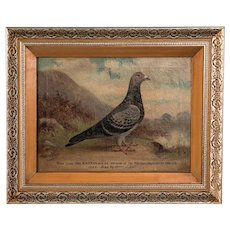 Antique Original English Oil on Canvas Painting of a Prize Winning Pigeon