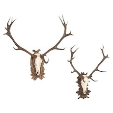 Antique Pair of Stag Antlers on Carved Black Forrest Mounts