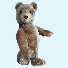 "Vintage Steiff Original Teddy Bear 1950's - 12"""