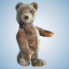 Vintage Steiff Original Teddy Bear 1950's