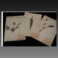 Vintage French Herbiers ~ Collection of Six