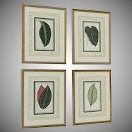 Set of Four Botanical Prints C.1860 French Matting Beautiful Leaved Plants Edward Joseph Lowe