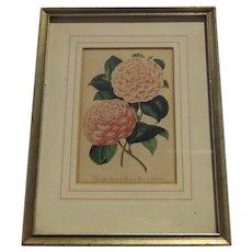 Print Camellia Flower Botanical Gilt Frame