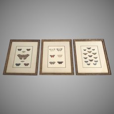 Original Color Engravings 18th Century Butterflies Framed