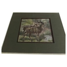 Vintage Colored Greater Kudu Male Female Print Kudu African Antelope Matted and Glass Natural History Richard Lydekker.