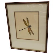 "Vintage Hand Colored Print ""Dragonfly"""