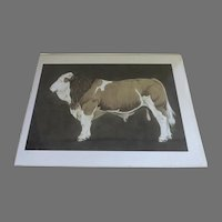 """Large Print Hereford Cow Cattle Numbered Signed """"Ryan"""""""