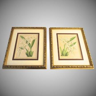 Two (2) John Nugent Fitch Color Prints Framed Orchids