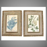 Pair Original Early Botanical Engraving of Cabbage and White Grapes Gilt and Painted Frames
