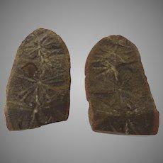 "Annularia stellata ""Calamites"" Fossil Both Halves Full"