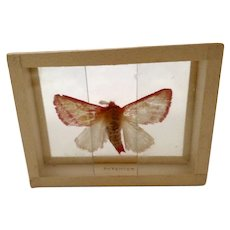 1900's Butterfly Moth Specimen Slide Mount