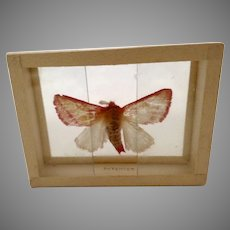 1900's Butterfly Moth Specimen Slide Mount