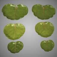 Vintage Red Vein Cabbage Leaf Plates, Jefferson, Florida
