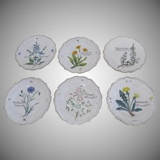 Set of Six (6) Italian Faience Plated New Old Stock Botanical Signed N. D. Dolfi