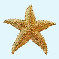 Large Gold Tone Starfish Brooch by Monet