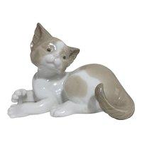 LLadro Kitten Contemplating Its Tail
