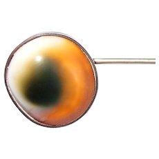 1800s Operculum Shell Eye Tie Pin