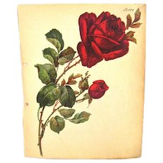 Gorgeous Large Single Rose with Bud Decals,  Germany, 1939