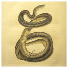 "First Edition of ""North American Herpetology"", 1836, Holbrook, Vol. 1"