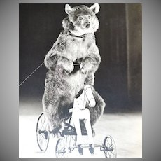 Culver ~ Circus Bear on Horse Cycle 8x10 Photograph