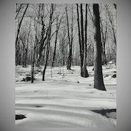 Original 'Winter in the Woods' B/W Art Photograph 8x10