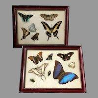 Framed Preserved Butterflies, Moths and Beetles
