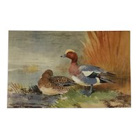 Ducks By The Pond Postcard- Roland Green