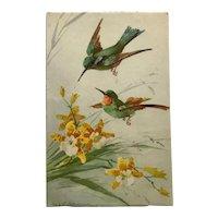 Katherine Klein's Hummingbirds In Flight