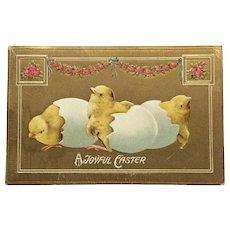 Hatching Easter Chicks Postcard