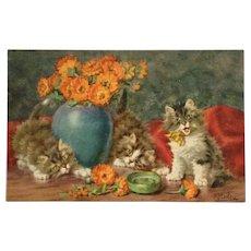 Kitty Shennanigans Again- Merlin