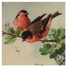 Birds In Summer- Catherine Klein