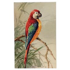 Portrait Of Colorful Parrot- Catherine Klein